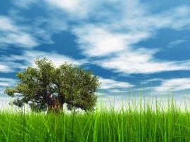 Tree & Grass