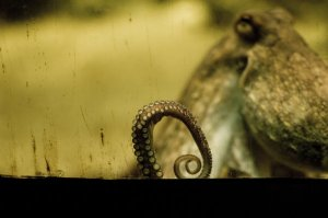 Octopus_Amsterdam_by_shinmat