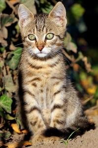 Home cat in the garden